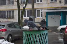 A Pigeons Basks On The Chimney Of A Ventilation Shaft