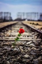Auschwitz Train Line - Road Of...