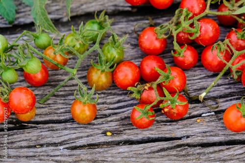 Fototapety, obrazy: Fresh tomato harvest on wood background