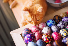 Home Red Cat And Easter Eggs On The Table.