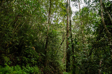 Lush green foliage in tropical rainforest at sunny day