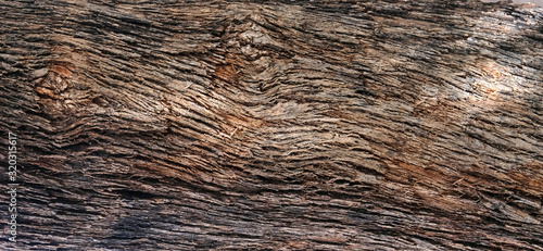 Photo Part of the trunk of an old olive tree with bark covered with a pattern of crack