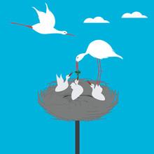 Stork Family - Bird Feeds The ...