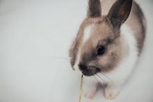 Little Bunny Eating Green Grass