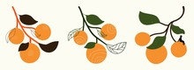 Vector Set With Oranges With Leaves. Doodle Elements, Grunge Dots, Man Silhouette