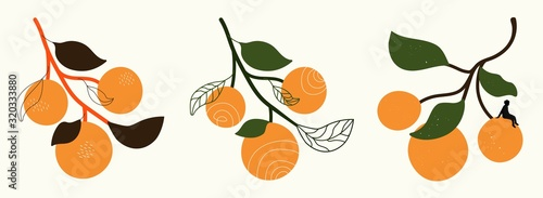 Fotografia Vector set with oranges with leaves