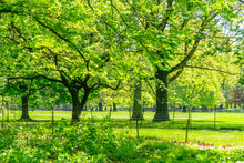 Many Growing Fresh Green Trees...