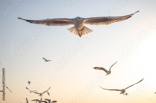 Seagulls bird flying over the sea with beautiful sunset on evening twilight sky landscape background