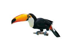 Toucan Bird In A Tree Branch O...