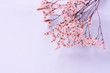 Floral layout with a lot of tiny white flowers on pale bluish pink pink toned background with copy space, blurred, selective focus