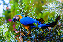 Blue Macaw Parrot On A Branch ...
