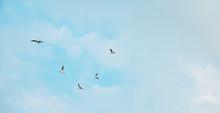 Flock Gulls Birds Fly In The M...