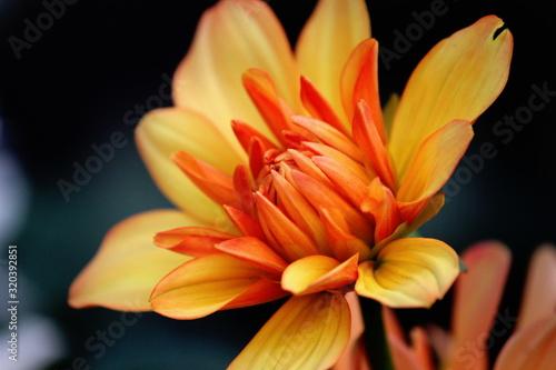 Primo piano fiore arancio