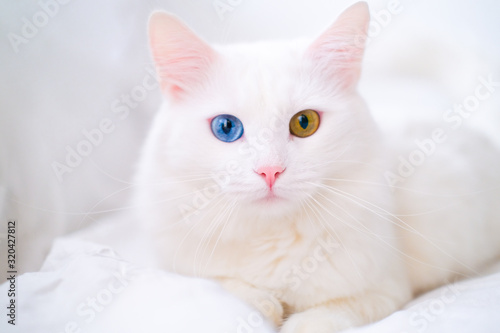 Photo White cat with different color eyes