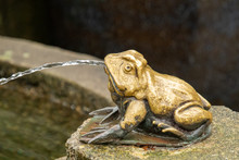 A Picture Of A Small Frog Shap...