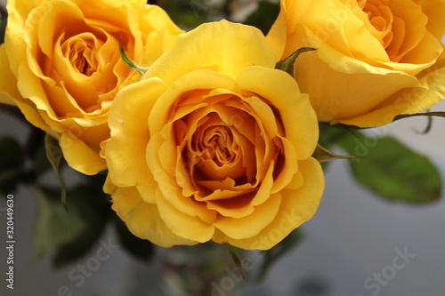 Heart of the Yellow Rose