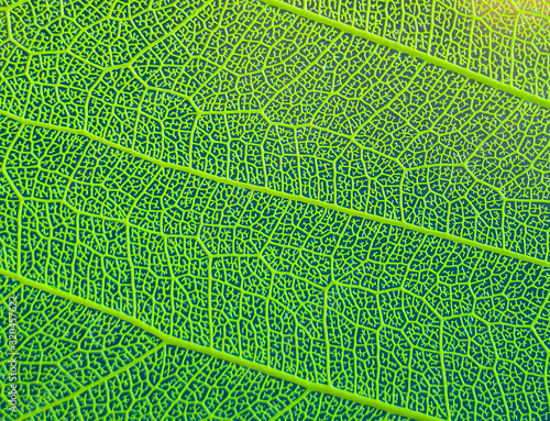 Photo texture of green leaf