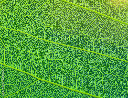 texture of green leaf Wallpaper Mural