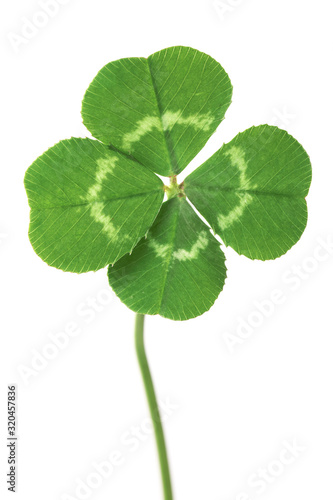 Slika na platnu Perfect lucky four leaf clover isolated on white