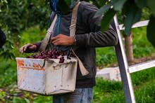 Seasonal Farm Worker Hanged A ...