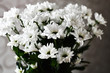 A bouquet of white daisies in the rays of light. Close-up of white flowers.