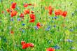 Leinwanddruck Bild - Green meadow with poppy flowers