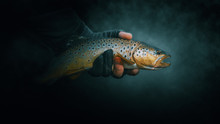 Beautiful Trout Close-up On A ...
