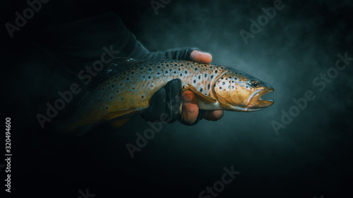 Beautiful trout close-up on a dark background. Canvas-taulu