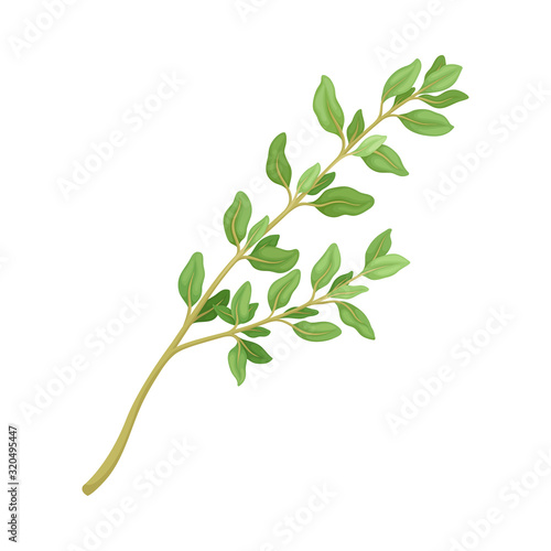 Fotomural Thyme Twig as Kitchen Herb for Cooking Vector Element
