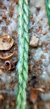 Macro Closeup Of Green Grass W...