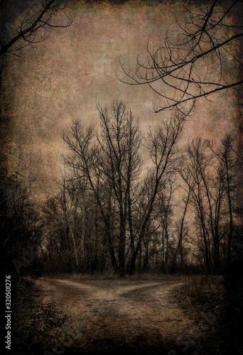 mglisty-tajemniczy-krajobraz-lasu