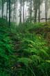 Leinwanddruck Bild natural green forest, wilderness jungle landscape