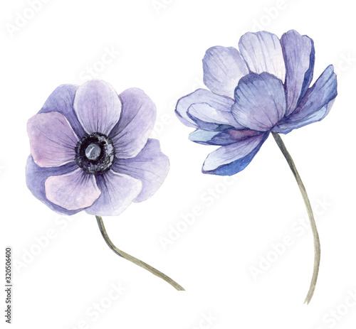 Photo set watercolor illustration beautiful blue anemone background