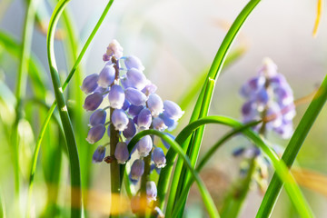 Panel Szklany Inspiracje na wiosnę Spring flowers