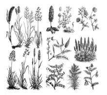 Forage Plants - Antique Engraved Illustration From Brockhaus Konversations-Lexikon 1908