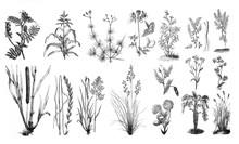 Forage Plants - Antique Engraved Illustration From Brockhaus Konversations-Lexikon 1908