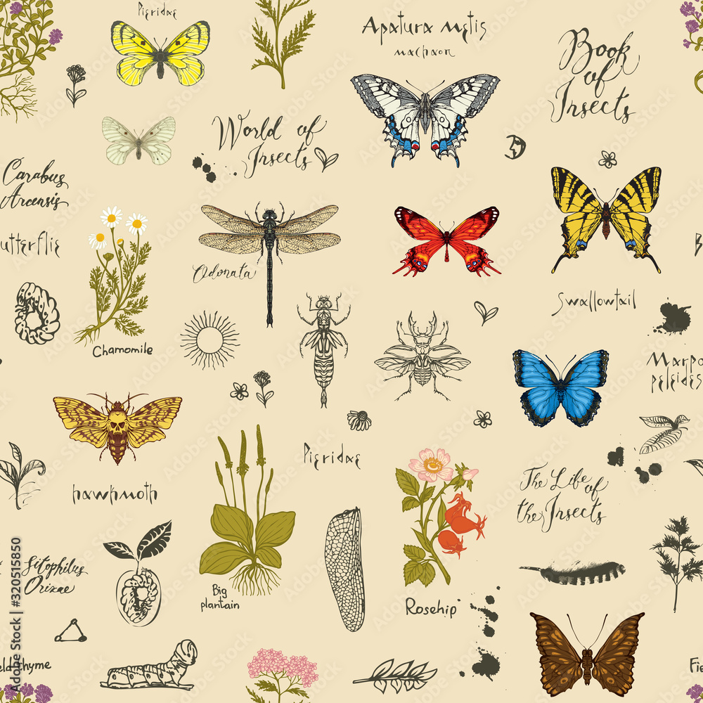 Fototapeta Vector background with Colorful butterflies, beetles, various herbs, sketches and inscriptions. Seamless pattern with insects and medicinal herbs in retro style. Wallpaper, wrapping paper, fabric
