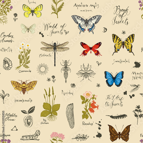 Vector background with Colorful butterflies, beetles, various herbs, sketches and inscriptions Canvas Print