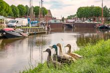 Vier Verschiedene Enten Schauen Auf Den Hafen In Carolinensiel