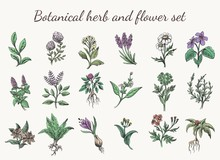 Vintage Color Herbs And Flowers
