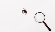 Beetle Lucanus (Lucanidae). Ma...