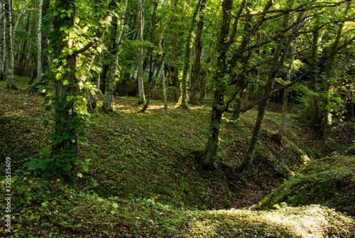 森の中の遊歩道安らぐ