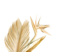 Golden Palm Leaves With Golden Strelitzia Flower. Isolated On White.