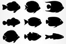 A Set Of Nine Different Fish I...