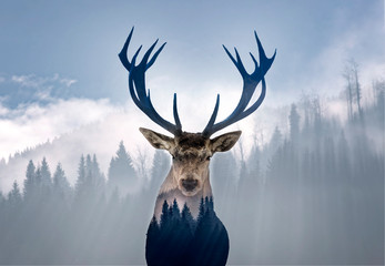 Fototapeta Do sypialni Red deer and the misty forest