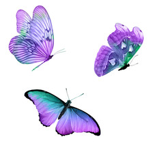 Three Tropical Butterflies With Colorful Wings Isolated On A White