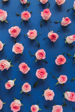 Floral Composition With Pink Rose Flower Buds And Leaves Pattern Texture On Blue Background. Flatlay, Top View.