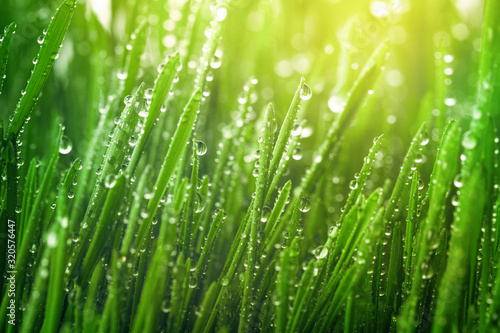 Fresh green grass with dew drops in morning sunny lights Fototapet