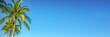 Leinwandbild Motiv Palm tree on panoramic blue sky background with copy space, vintage style