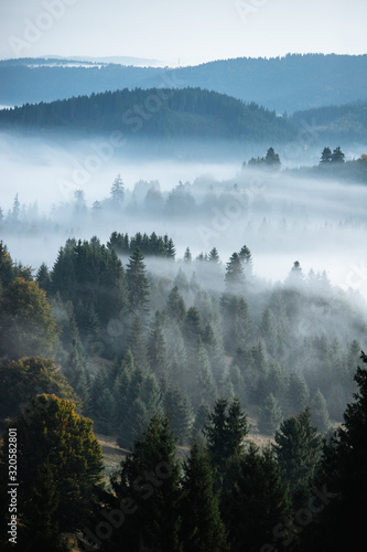 Misty landscape with spruce forest.Carpathian mountains in the background. Fototapete